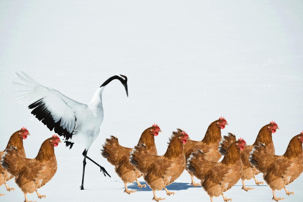 crane-in-chicken